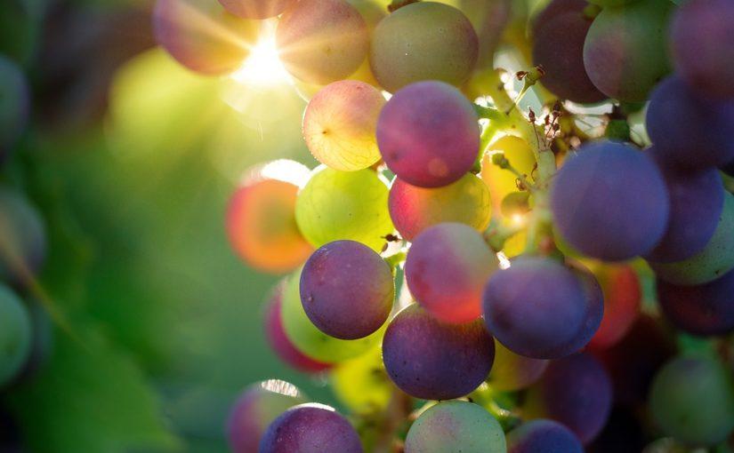 Séjour dans un vignoble de France
